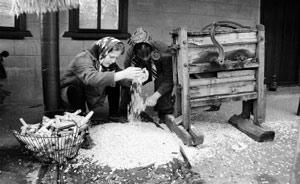 Лущение кукурузы в Бешалме до сих пор проводят дедовским способом